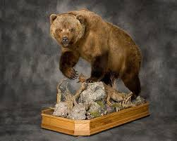 Taxidermy Bear Rug Bear Taxidermist Bear Taxidermy Black Bear Mount Bear Taxidermy