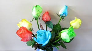 different color roses how to make rainbow coloured roses
