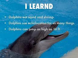dolphins by julia wuestewald