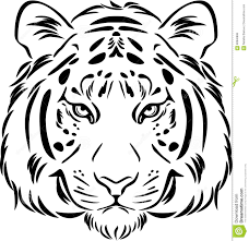 tiger black and white outline stock vector illustration of