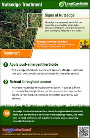 how to get rid of u0026 kill nutsedge nut grass treatment u0026 control