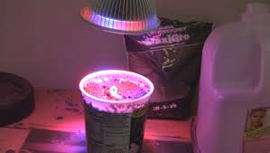 can this 12watt led grow light actually grow a plant youtube