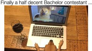 The Bachelor Meme - memebase the bachelor all your memes in our base funny memes