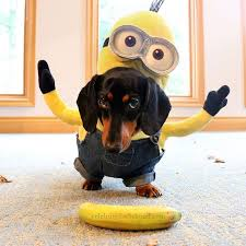 costumes for dogs 54 minions dog costume 10 dog costume ideas come wag