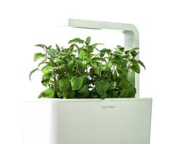 growing plants indoors with artificial light best light for growing plants indoors hartlanddiner com