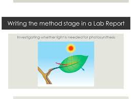Lab Bench Photosynthesis Writing The Method Stage In A Lab Report Investigating Whether