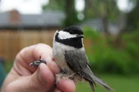 portraits of pretty birds the waterthrush blog