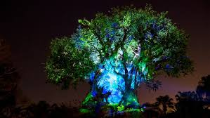 tree of animal kingdom attractions walt disney world resort