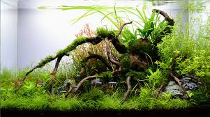 Tank Aquascape Aquarium Planted Tank Aquascape Aquascapes Pinterest