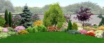 immagini di giardini fioriti piante da giardino sempreverdi e fiorite quali scegliere