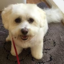 alexander u0027s dog grooming 31 reviews pet groomers 2415 ash st