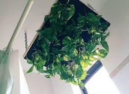 decorating with plants 10 inventive indoor gardening ideas bob vila