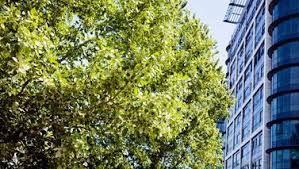 total trees excellence in arboriculture home