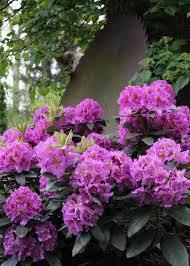 25 beautiful shade shrubs ideas on shade loving