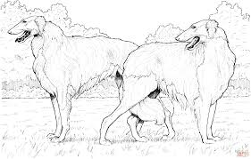 borzoi russian wolfhound coloring page free printable coloring pages