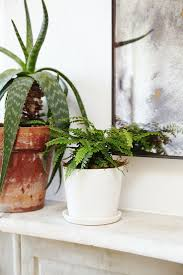 indoor plants home decor ideas planters hanging clean air modern