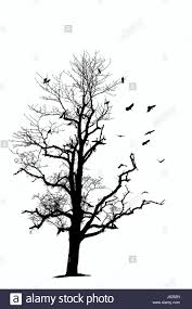 isolated tree bird birds branch silhouette crows isolated optional