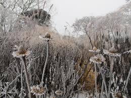 q a piet oudolf on designing a winter garden the new york times