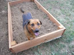 why does my dog dig and dog training to stop it