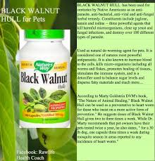native american plants used for healing natural de wormer for animals u2013 animal health detox fasting