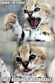 Mad Kitty Meme - 24 best mad kitty images on pinterest funny animals funny cats