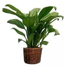 plante de bureau feng shui l utilité des plantes en feng shui fengshuiharmonie