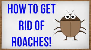 How To Get Rid Of Roaches In The Bathroom How To Get Rid Of Roaches In Your House Without An Exterminator