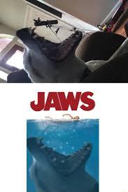 Jaws Meme - jaws meme by tylantismax memedroid