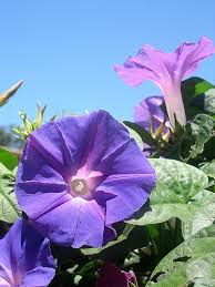 flowers san diego a day in san diego