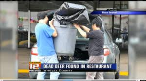 chinese restaurant closed after dead deer found inside kitchen