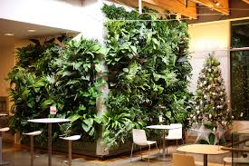 frequently asked questions livewall green wall system
