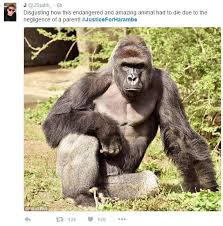 Gorilla Memes - justiceforharambe tweet harambe the gorilla know your meme