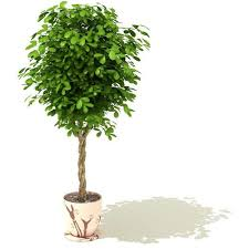 green potted tree 3d model