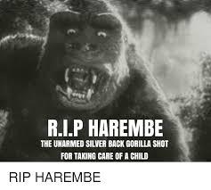 Gorilla Meme - white gorilla meme gorilla best of the funny meme