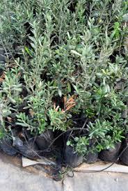 plantgroup your wholesale plant supplier delivering plants to