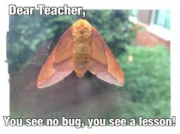 Moth Meme - moth meme dear teacher love teacher
