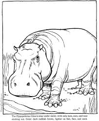 pages to color animals hippopotamus hippo coloring picture sheets