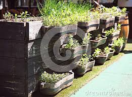 green seedlings and plants in a wooden ornamental boxes at