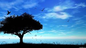 wallpaper for desktop images xinature com silhouette clouds trees blue night birds nature