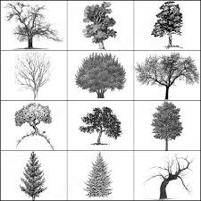 Free Photoshop Pine Trees