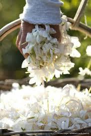 Parfum De Provence 167 Best Grasse Capitale Du Parfum Images On Pinterest Perfume