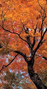 monitor fall foliage