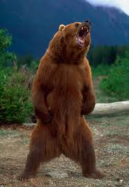 Running Bear Meme - how to survive a bear encounter and what to do if it all goes