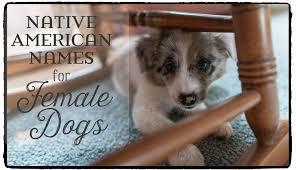 australian shepherd female names 49 meaningful native american names for female dogs pethelpful