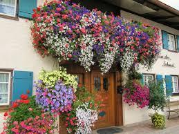blumen fã r balkon 26 best balkon növények images on creative balcony