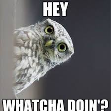 Funny Owl Meme - kuvahaun tulos haulle owl meme huumori pinterest owl meme