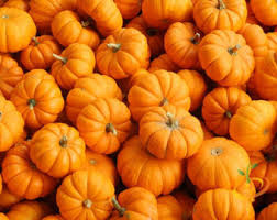 small pumpkins small pumpkins etsy