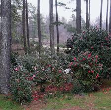 Clemson Botanical Garden by 215 Best Botanical Gardens Around The World Images On Pinterest