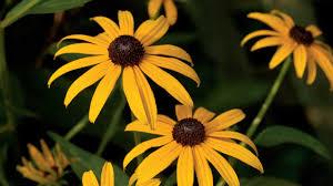 heat loving plants drought tolerant plants southern living