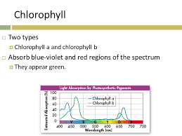 how well would a plant grow under pure yellow light 1 review why are pigments such as chlorophyll needed for